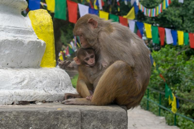 Affentempel (Kathmandu)