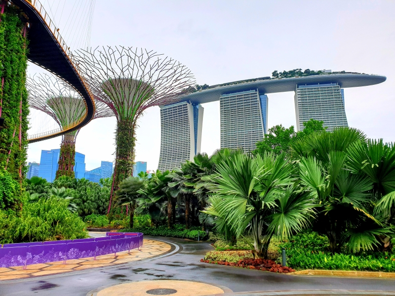 Gardens By The Bay: Supertrees mit OCBC Skyway, im Hintergrund das Marina Bay Sands